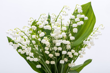 mayflower: Lily of the Valley (Convallaria Majalis) isolated on white