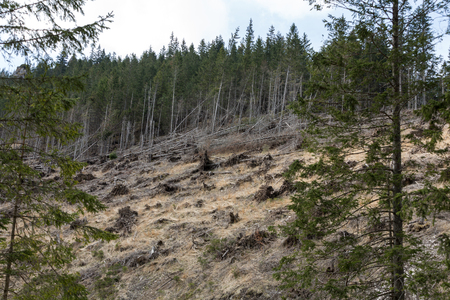 lifeless: Forest being cut down turning into a dry lifeless field Stock Photo