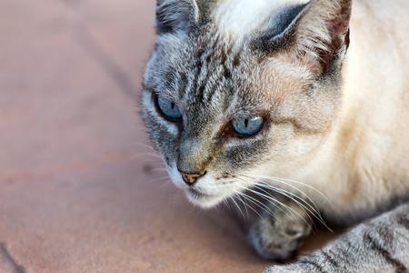 grey eyed: A Beautiful domestic cat