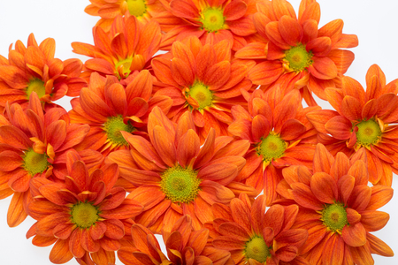 The background image of the orange chrysanthemum flowers