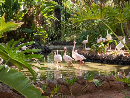 camargue: Nice pink big bird Greater Flamingo, Phoenicopterus ruber Stock Photo