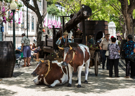 agricultura: FUNCHAL, MADEIRA, PORTUGAL - SEPTEMBER 1, 2016: Sceneries related to the production of wine during the Wine Festival   in Funchal on Madera, Portugal