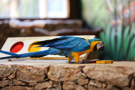 Circus shows of parrots on Fuerteventura, Canary Island, Spain
