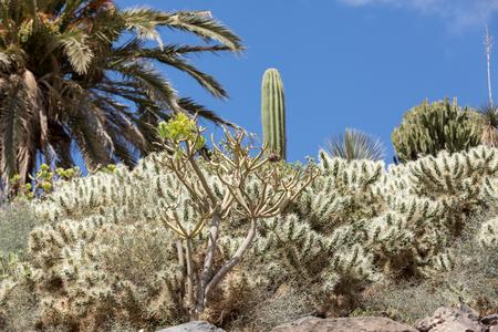 Beautiful Succulent Cactus Plants in Garden Stock Photo
