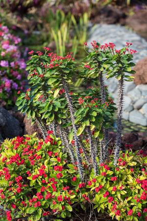 Tropical garden in Oasis Park on Fuerteventura. Canary Island. Spain