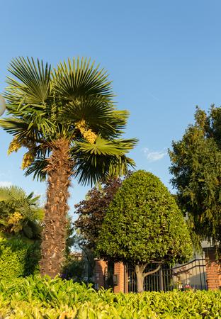 Garden with palm tree in Lazise on Lake Garda. Italy Stock Photo