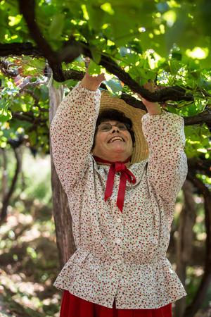 ESTREITO DE CAMARA DE LOBOS, PORTUGAL - SEPTEMBER 10, 2016: Woman harvesting grapes in the vineyard of the Madeira Wine Company at Madeira Wine Festival in Estreito de Camara de Lobos, Madeira, Portugal. The Madeira Wine Festival honors the grape harvest