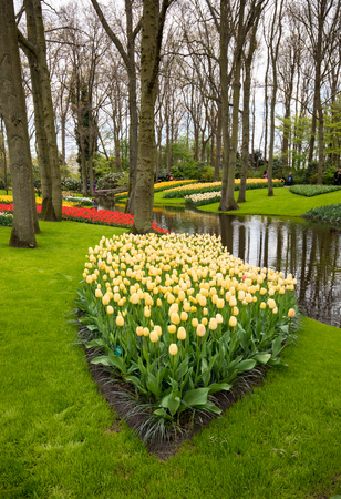Colorful flowers in the Keukenhof Garden in Lisse, Holland, Netherlands. Stock Photo