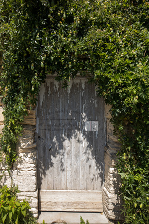 Old wooden door on stone brick house with ivy
