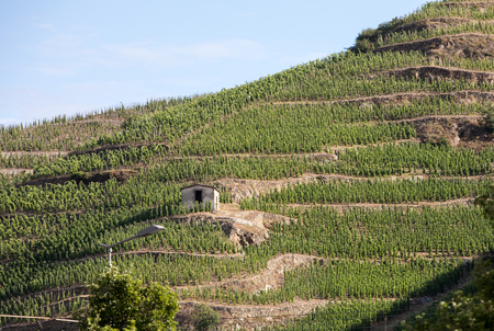 View of the M. Chapoutier Crozes-Hermitage vineyards in Tain lHermitage, Rhone valley, France Banco de Imagens