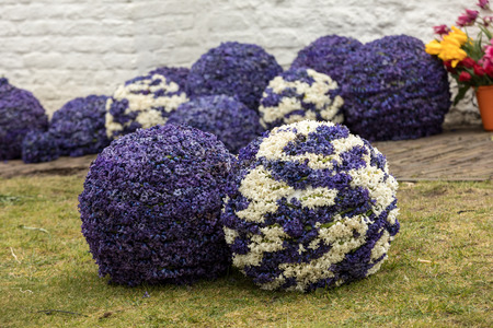 Noordwijkerhout, Netherlands - April 21,  2017: Balls made of hyacinths for the traditional flowers parade Bloemencorso from Noordwijk to Haarlem in the Netherlands 에디토리얼