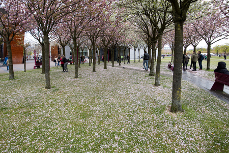 AMSTERDAM, NETHERLANDS - APRIL 22, 2017: Garden with flowering trees inspired by Van Gogh paintings between the Van Gogh museum and the Rijksmuseum on a spring day. Amsterdam, Netherlands Imagens - 99492853