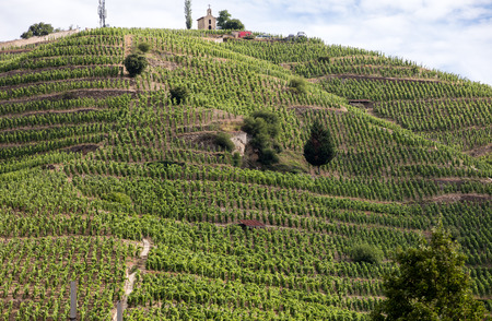 View of the M. Chapoutier Crozes-Hermitage vineyards in Tain l'Hermitage, Rhone valley, France Banque d'images