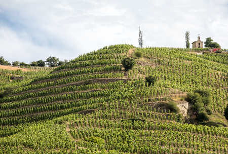 View of the M. Chapoutier Crozes-Hermitage vineyards in Tain l'Hermitage, Rhone valley, France