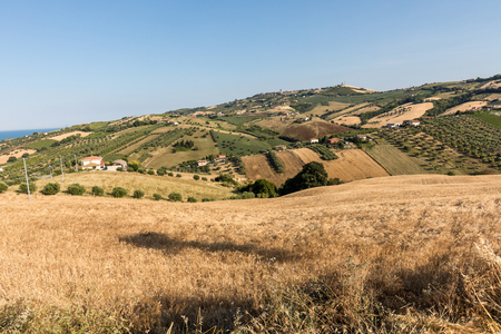 Panoramic view of olive groves and farms on rolling hills of Abruzzo Stockfoto