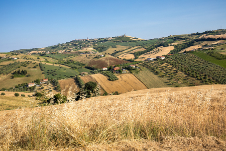 Panoramic view of olive groves and farms on rolling hills of Abruzzo Stok Fotoğraf