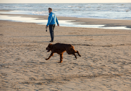 Katwijk, Netherlands - April 23, 2017: Red setter dog having fun on a beach at Katwijk aan Zee, Netherlands