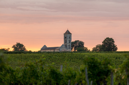 Sunset over the vineyards of Montagne near Saint Emilion. Gironde, Aquitaine. France