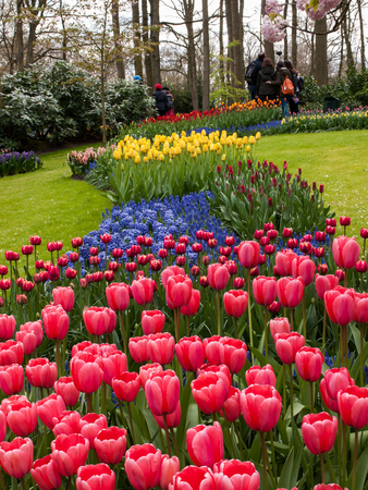 Lisse Netherlands - April 19, 2017: Colorful flowers in the Keukenhof Garden in Lisse, Holland, Netherlands.