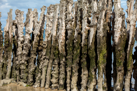 Big breakwater, 3000 trunks to defend the city from the tides  in Saint-Malo, Ille-et-Vilaine, Brittany, France Stock Photo