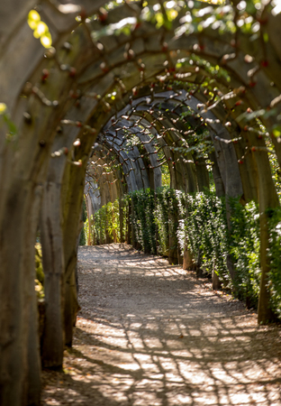 Plant Tunnel in  the gardens of the Jardins de Marqueyssac in the Dordogne region of France