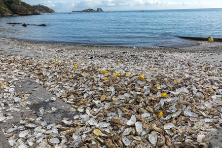 Thousands of empty shells of eaten oysters discarded on sea floor in Cancale, famous for oyster farms.  Brittany, France 版權商用圖片