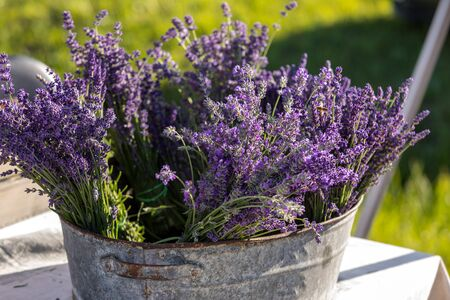 A bouquet of hand-cut scented lavender flowers Foto de archivo - 149404626