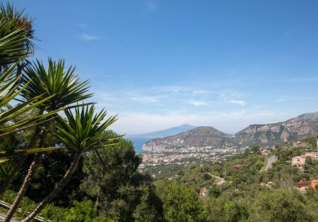 Palm tree with the Gulf of Naples and Vesuvius in the background 免版税图像