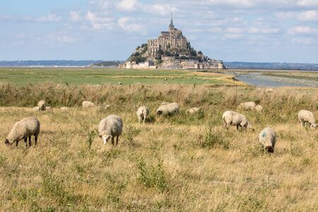 A flock of sheep grazing on the salt meadows close to the Mont Saint-Michel tidal island under a summer blue sky. Le Mont Saint Michel, France Stock Photo