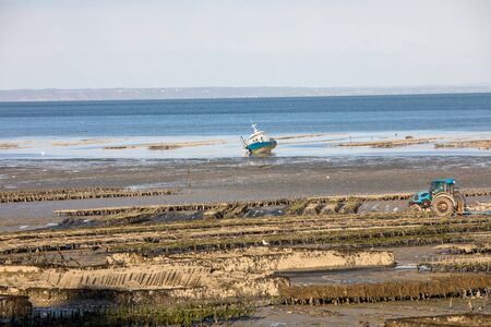 Oyster beds at low tide in oyster farm, Cancale, Brittany, France