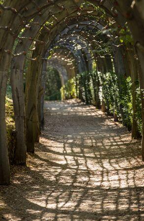 Plant Tunnel in  the gardens of the Jardins de Marqueyssac in the Dordogne region of France