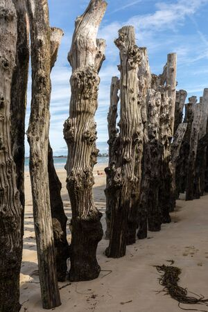 Big breakwater, 3000 trunks to defend the city from the tides, Plage de l'Éventail beach in Saint-Malo, Ille-et-Vilaine, Brittany, 免版税图像
