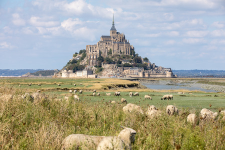 A flock of sheep grazing on the salt meadows close to the Mont Saint-Michel tidal island under a summer blue sky. Le Mont Saint Michel, France Editorial