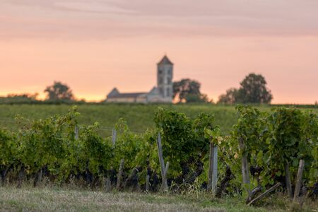Sunset over the vineyards of Montagne near Saint Emilion. Gironde, Aquitaine. France