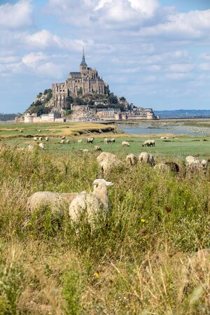 A flock of sheep grazing on the salt meadows close to the Mont Saint-Michel tidal island under a summer blue sky. Le Mont Saint Michel, France Stockfoto