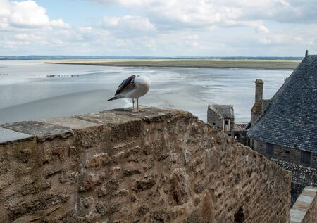 Seagull at Le Mont Saint-Michel, medieval fortified abbey and village on a tidal island in the Normandy, France, at low tide