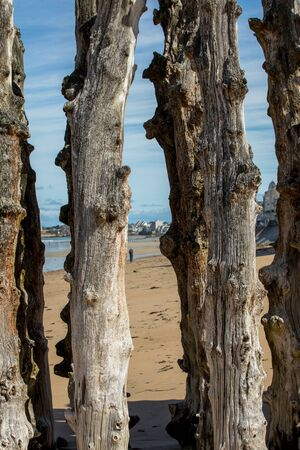 Big breakwater, 3000 trunks to defend the city from the tides  in Saint-Malo, Ille-et-Vilaine, Brittany, France 스톡 콘텐츠
