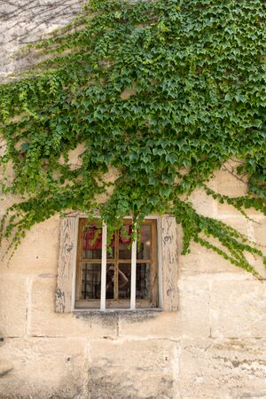 wall of a house  overgrown with Ivy in Les Baux de Provence. Bouches du Rhone, Provence, France