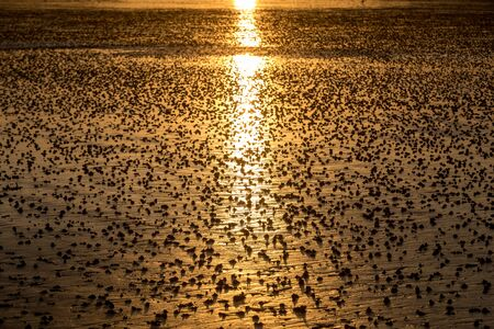 Beach abstract, wet sand reflecting sunlight during sunset