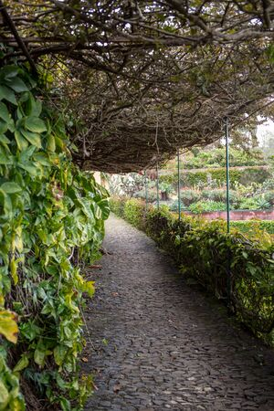 Tropical Botanical Garden in Funchal on Madeira island, Portugal