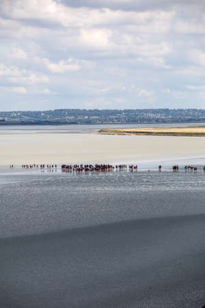 Le Mont-Saint-Michel, France - September 13, 2018: Group of hikers in the bay at low tide. Hike in the bay with a knowledgeable guide. Mont Saint-Michel , Normandy, France