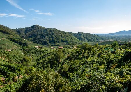 Picturesque hills with vineyards of the Prosecco sparkling wine region in Guietta and Guia. Italy.