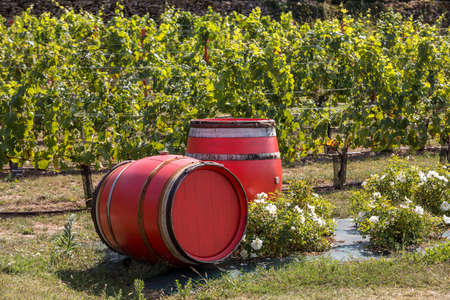 Two old red barrels in a vineyard in Eyrignac. Dordogne, France