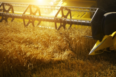 combine: Combiner harvesting the wheat field at sunset