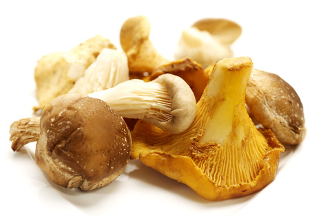 heap of diffrent mushrooms isolated on a white background with shadow photo