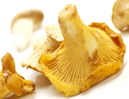 Chantarelles on a white background with shadow, closeup photo
