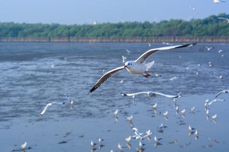 the seagulls: seagulls group