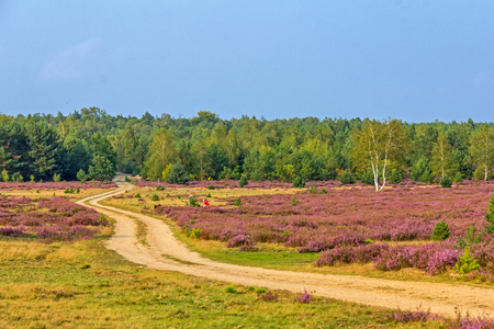 Path in the heath landscape