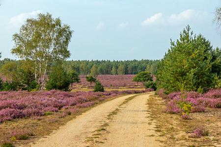 Path in the heath landscape Standard-Bild - 100288803
