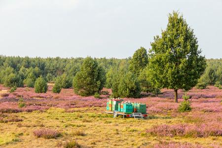 Heath field with bee box Standard-Bild - 100298127